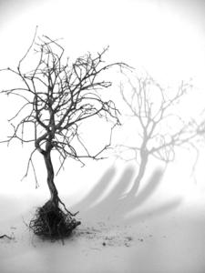 bonsai-1199826